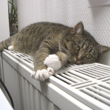 Cold radiator repair